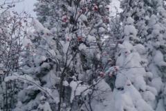 Инструктор сноуборд 12